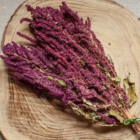 Amaranth in der Rispe